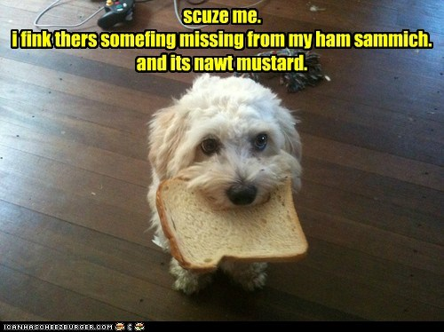 bread dogs ham sandwhich somethings-missing what breed