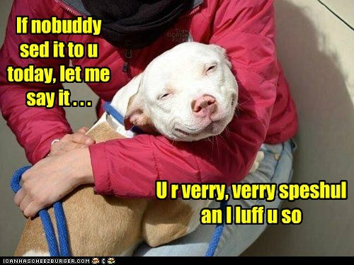 awww,captions,dogs,hug,love,pitbull,special,warm and fuzzy