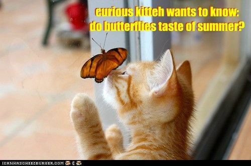 curious kitteh wants to know: do butterflies taste of summer? curious kitteh wants to know: do butterflies taste of summer?