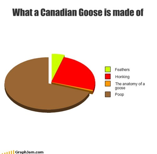 birds,canadian goose,poop everywhere