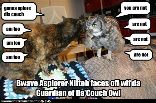 Bwave Asplorer Kitteh faces off wif da Guardian of Da'Couch Owl gonna splore dis couch you are not am too are not am too are not am too are not