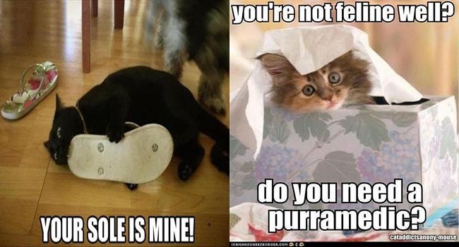 funny puns about cats