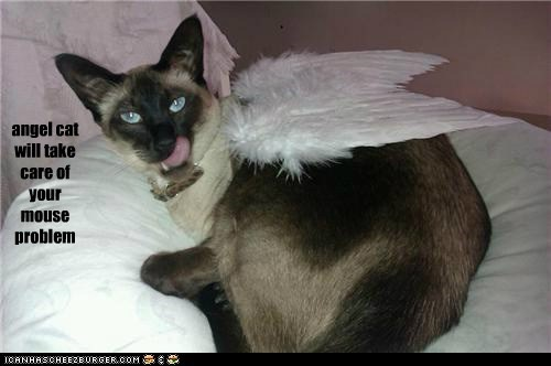 angel cat will take care of your mouse problem