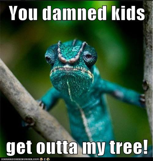 damn kids,get off my lawn,grumpy,lizard,old man,tree