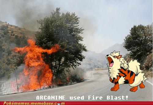 arcanine,blastoise,IRL,irl fire blast