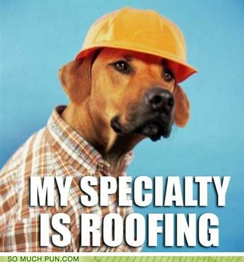 dogs,double meaning,homophone,literalism,roof,roofing,ruff,sound