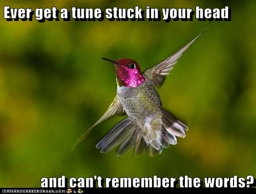 cant-remember,humming,hummingbird,lyrics,song,stuck in your head,words