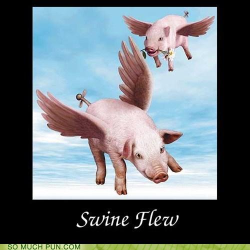 double meaning,flew,flu,homophone,literalism,swine,swine flu