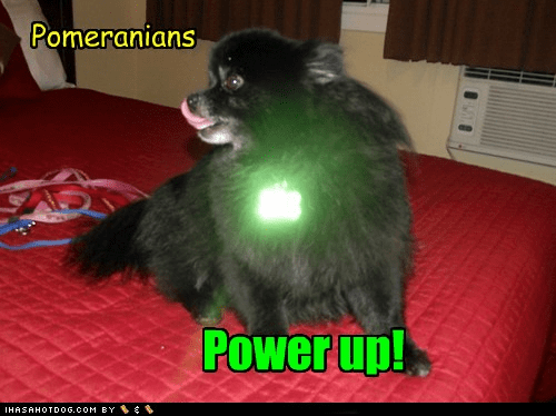 dogs glowing pomeranian power up super heros - 6543163648