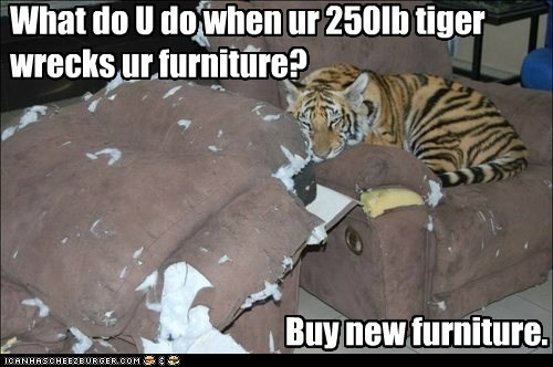 What do U do when ur 250lb tiger wrecks ur furniture? Buy new furniture.