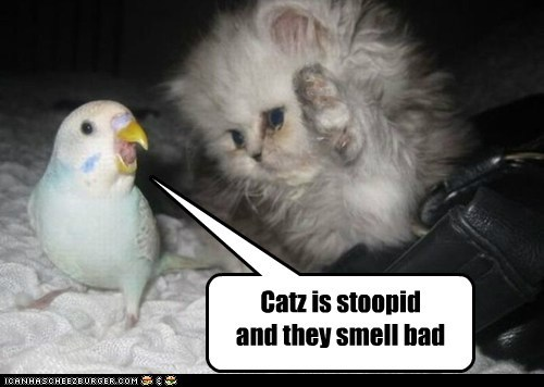 Catz is stoopid and they smell bad