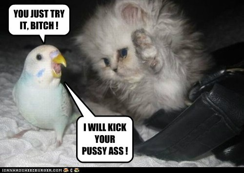 YOU JUST TRY IT, BITCH ! I WILL KICK YOUR PUSSY ASS !