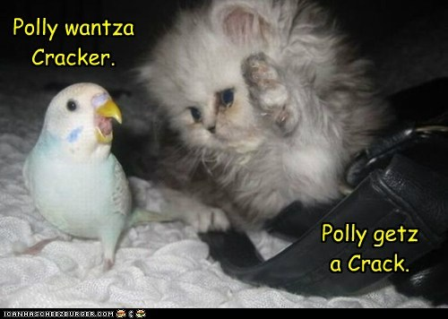 Polly wantza Cracker. Polly getz a Crack.