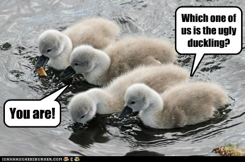 Which one of us is the ugly duckling? You are!