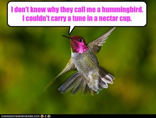bird,confused,hummingbird,singing,song,tone deaf,tune