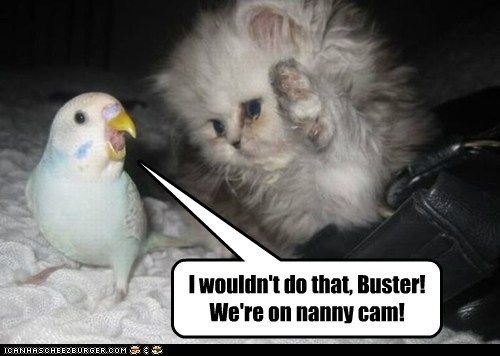 I wouldn't do that, Buster! We're on nanny cam!