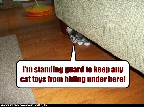 cat toys,couch,under,Cats,captions,toy