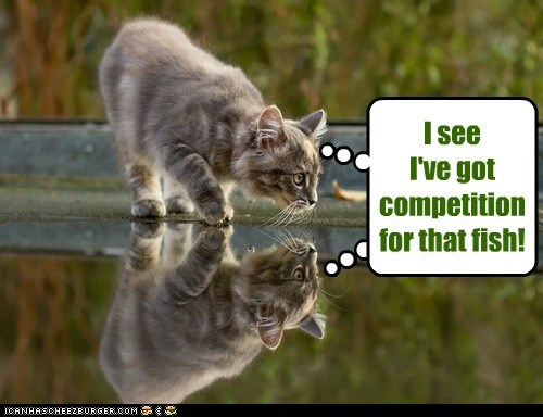 captions Cats competition dumb fish mirror pond