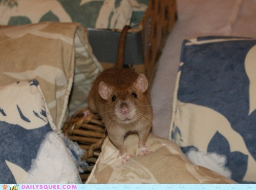 pet,pillows,rat,reader squee,smile,sofa