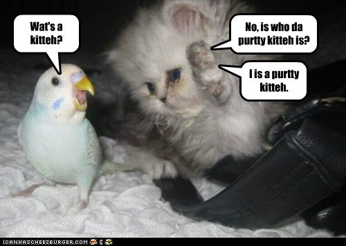 No, is who da purtty kitteh is? Wat's a kitteh? I is a purtty kitteh.