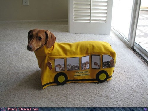 dogs,dog in costume,school bus