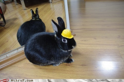 use protection,safety bunny,construction
