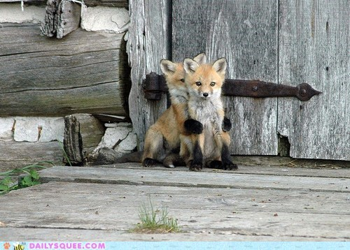 foxes Babies kits hide and seek hiding squee