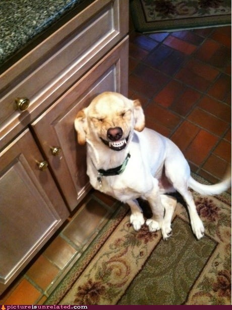 creepy dogs smile dog teeth - 6544929280