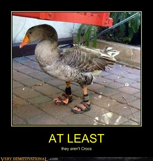 croc duck sandal wtf - 6545011712