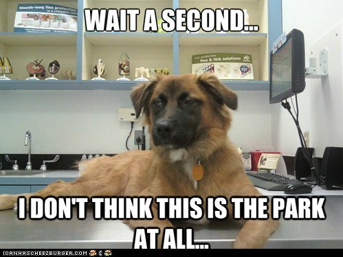 captions,dogs,lies,parks,unsure,vet,vets