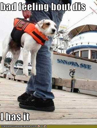 jack russel terrier water - 654513408