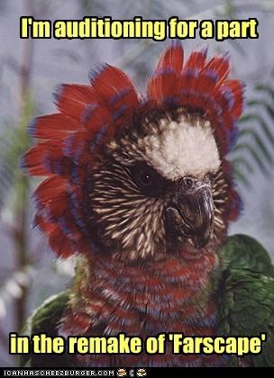 alien audition bird birds captions color farscape moya parrot parrots pilot remake - 6545299456