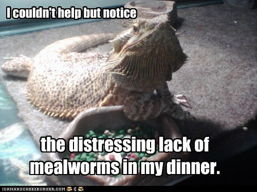 complaint,dinner,distressing,flabbergasted,hungry,iguana,lack,lizard,meal worms,notice