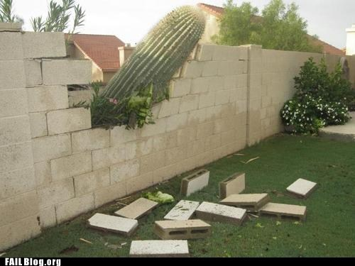 cactus,demolition,knock knock,wall