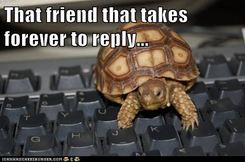 chat computer email friend reply slow taking forever turtle typing