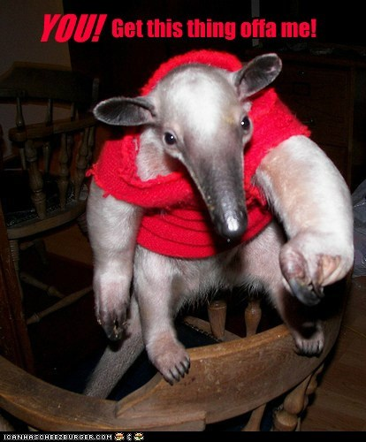 anteater GET IT OFF ME hoodie pointing red sweatshirt you