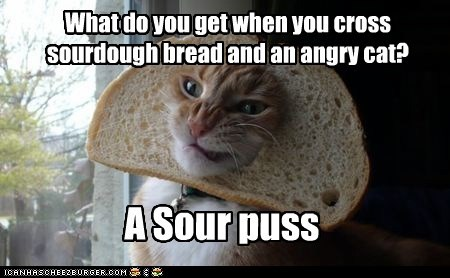 What do you get when you cross sourdough bread and an angry cat? A Sour puss