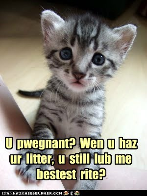 baby,captions,Cats,child,kid,litter,love,pregnant