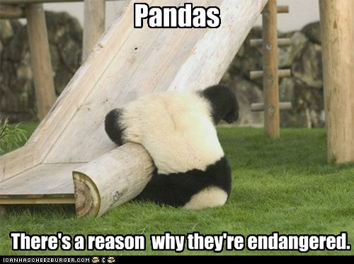 Pandas There's a reason why they're endangered.