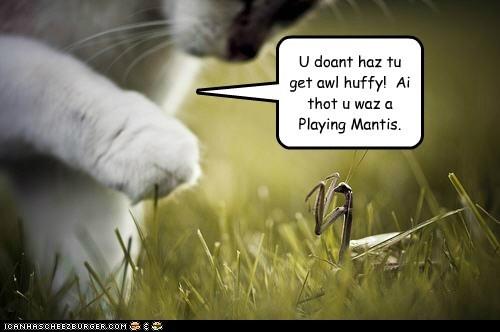 cat confused lolspeak playing praying mantis - 6546311424