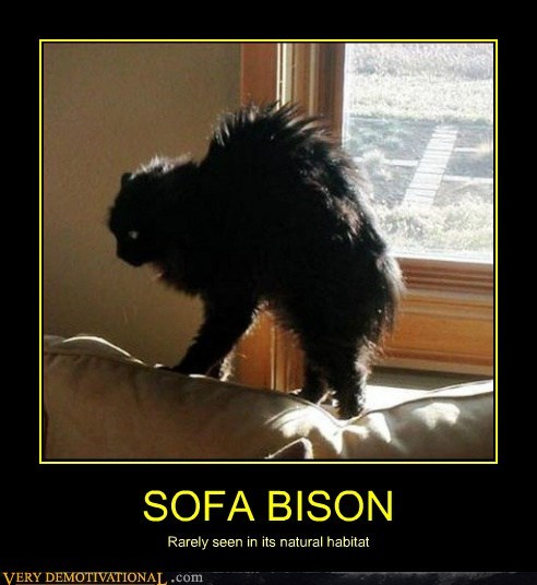 bison,cat,sofa