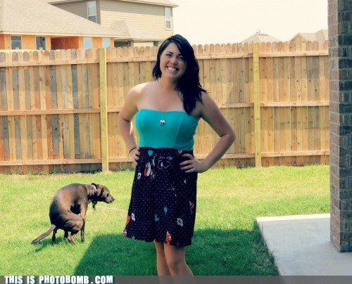 animal dogs girl poop - 6546510080
