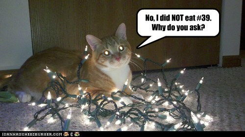 captions Cats christmas lights eat fairy lights glow light - 6546548480