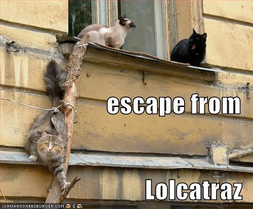 alcatraz,lolcats,prison,roof,window