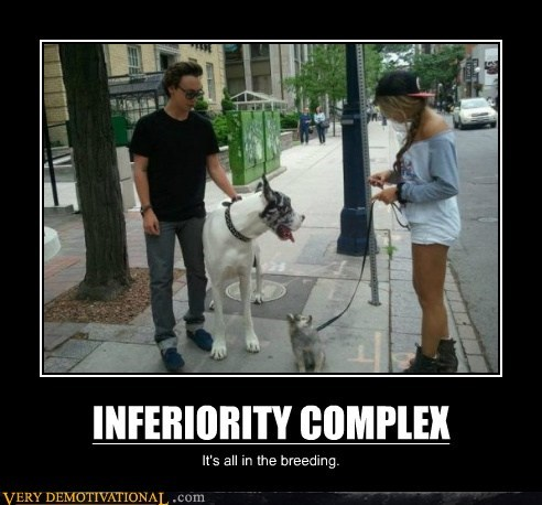 complex dogs inferiority - 6546671872