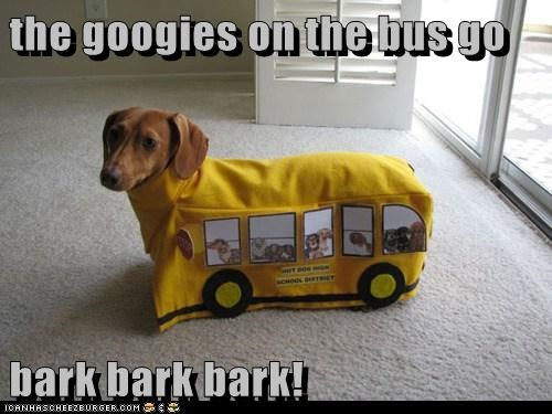 bark,bus,costume,dachshund,dogs,school bus