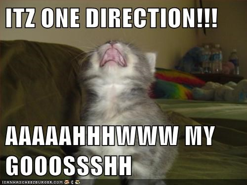 1d band captions Cats fangirl omg one direction scream - 6547033088