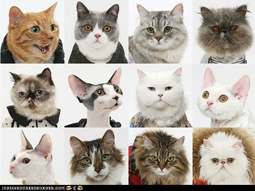 around the interwebs Cats fashion people pets united bamboo - 6547042816