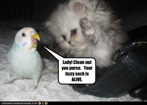alive,clean,kitten,lady,parakeet,purse
