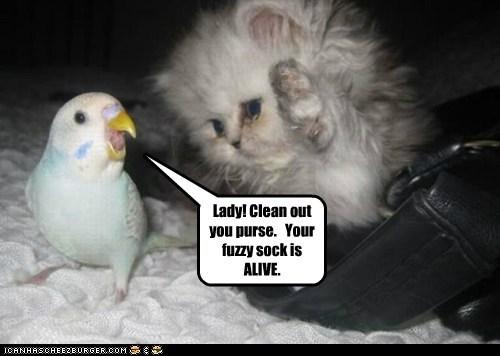 alive clean kitten lady parakeet purse - 6547126784